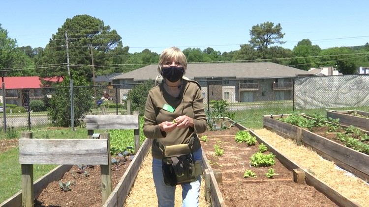 CASA Community Garden grows, delivers fresh food for seniors during pandemic
