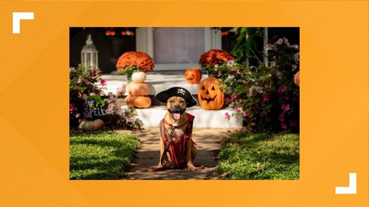 Huntsville Animal Services holds 'spooktacular' adoption special.