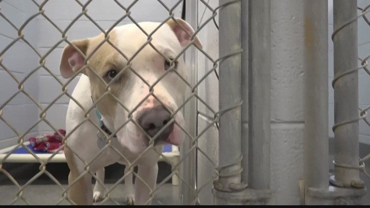 Returning your pandemic pet 'should be a last resort,' animal shelters say